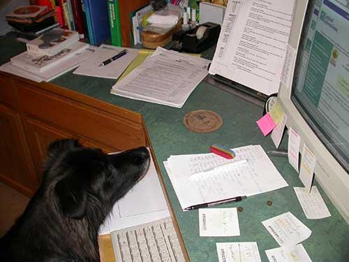 dog looking at keyboard