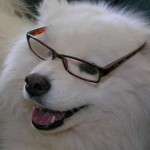samoyed beta reader